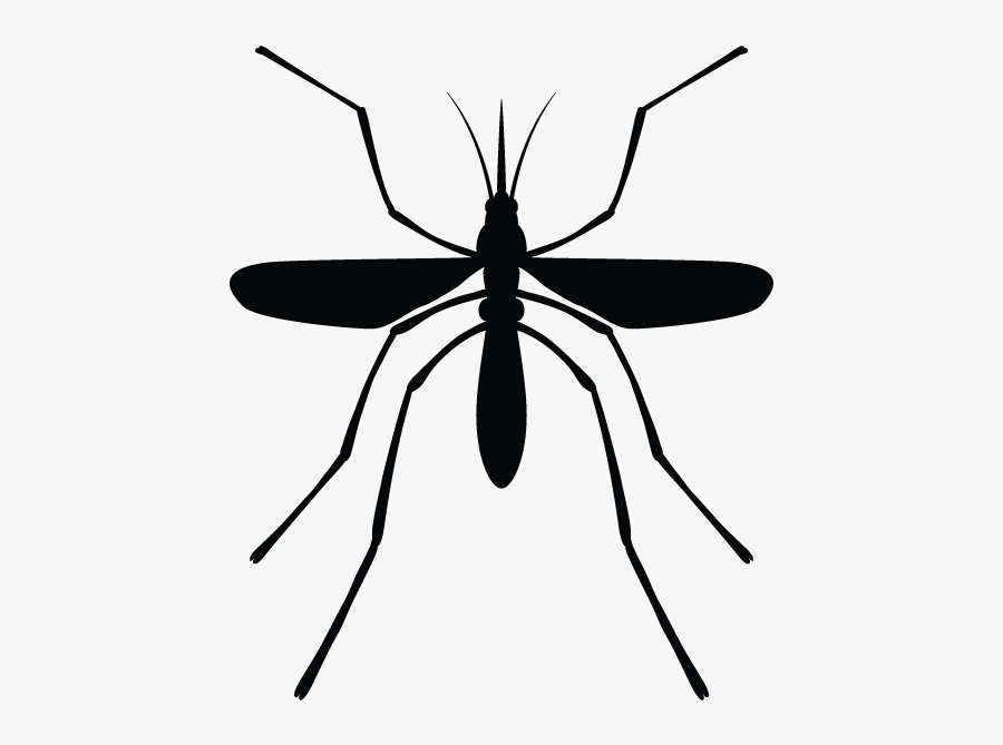 Mosquito Clipart Mosquito Control - Membrane-winged Insect, Transparent Clipart