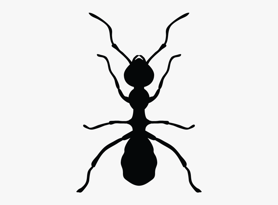 Ants In Minnesota Homes And Offices - Pest Cantrol Ant Logo Hd, Transparent Clipart