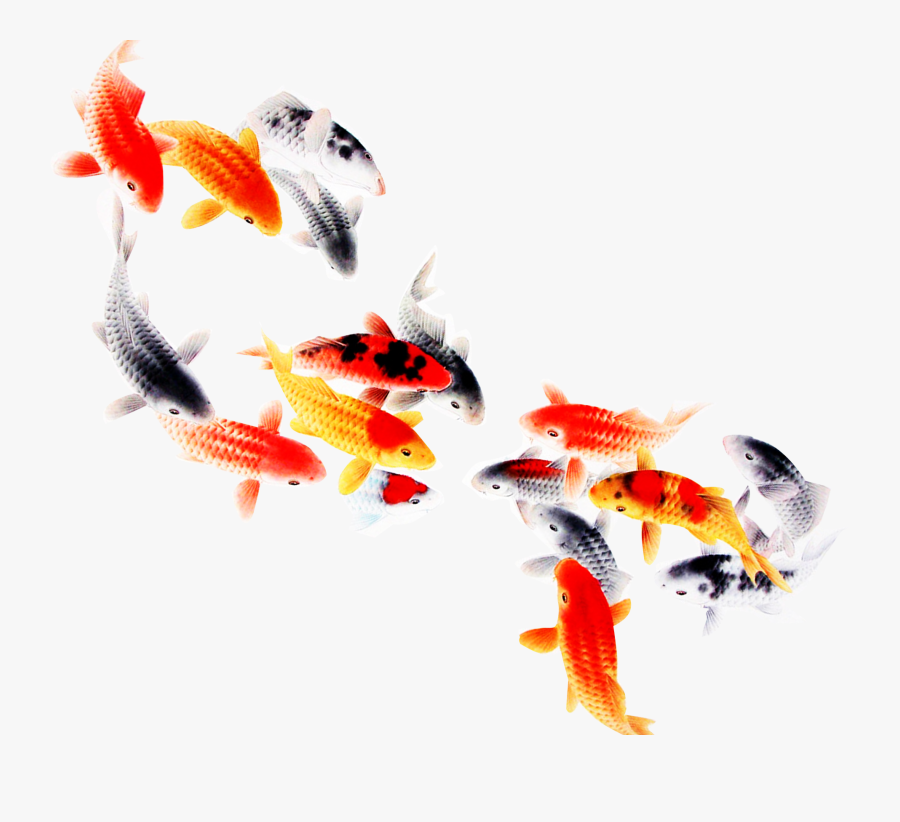 Koi Fish Computer File - Transparent Background Koi Fish Png, Transparent Clipart