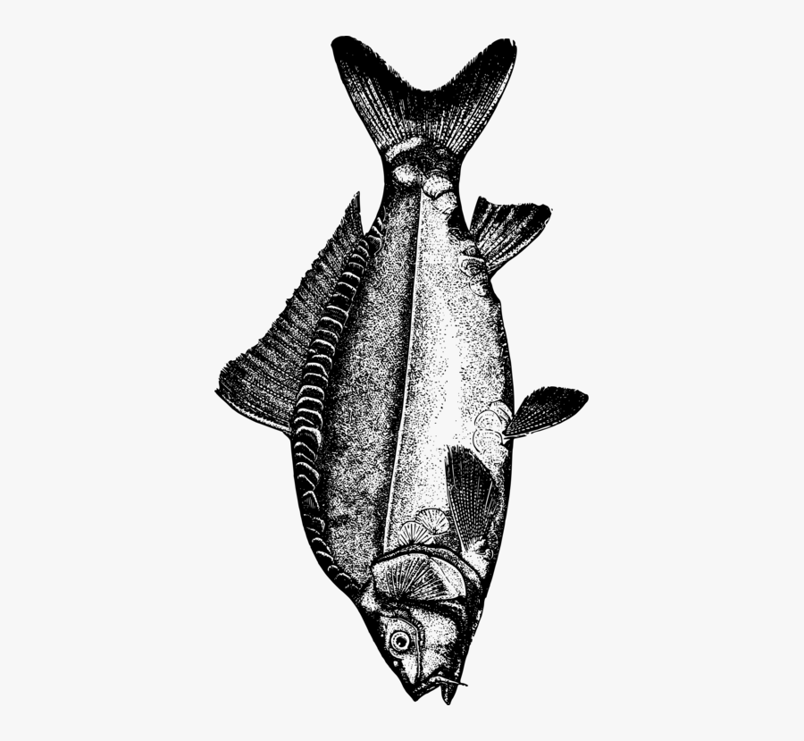 Bat,monochrome Photography,seafood - Common Carp Fish Black And White, Transparent Clipart
