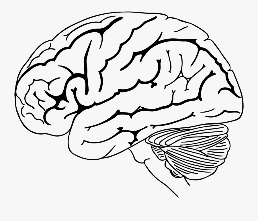 Brain Png Drawing - Png Brain Drawing Transparent, Transparent Clipart