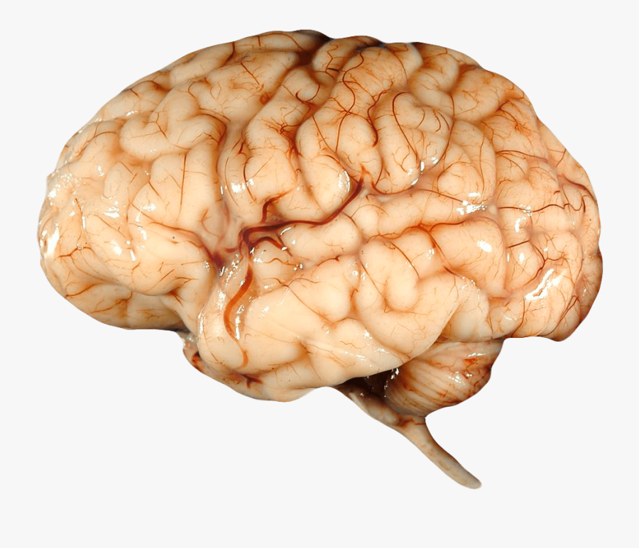 Real Brain - Human Brain Transparent Background, Transparent Clipart