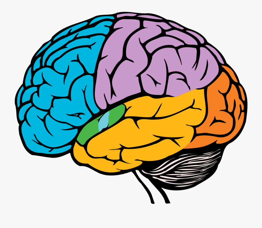 Brain Drawing Easy , Free Transparent Clipart - ClipartKey