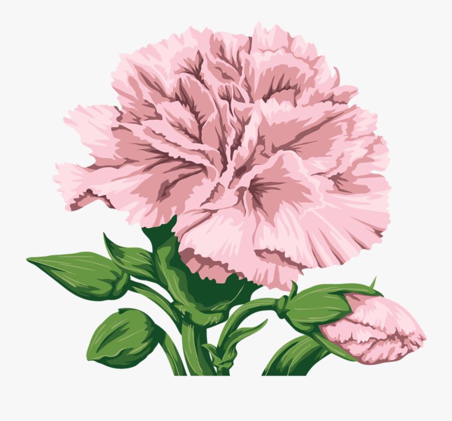 Transparent Pink Carnation Png - Free Carnation Flower Clipart, Transparent Clipart