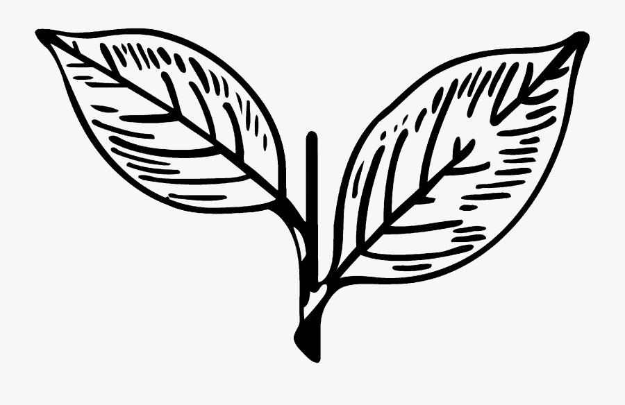 Leaf,black And White,plant,botany,clip Art,flower,tree,plant - Symbol Of All India Anna Dravida Munnetra Kazhagam, Transparent Clipart