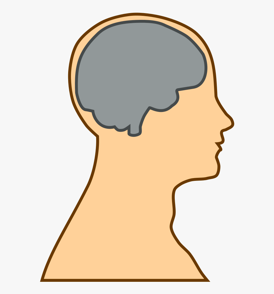 Free Simple Brain Silhouette - Cartoon Head With Brain, Transparent Clipart