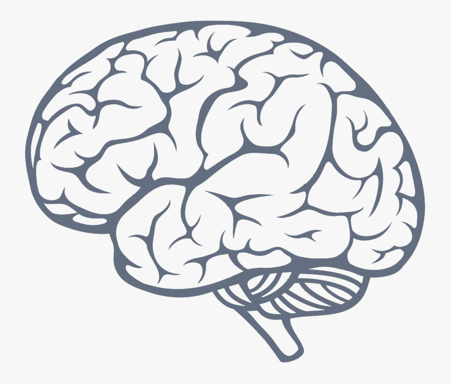 Brain Png Image Simple Brain Drawing Free Transparent Clipart Clipartkey