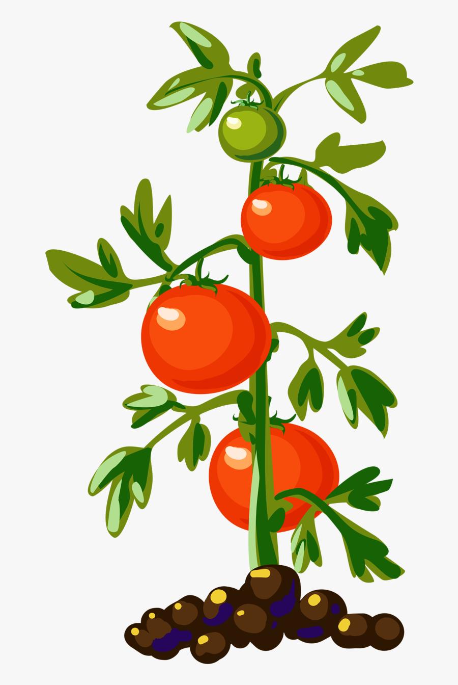 Thumb Image - Tomato Plant Clipart, Transparent Clipart