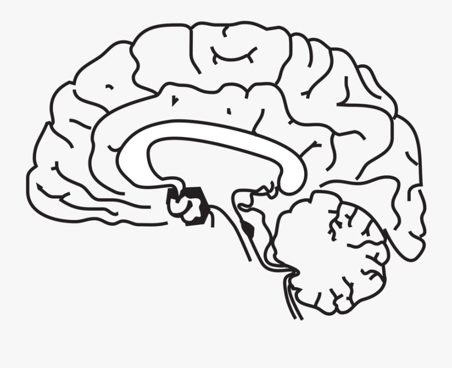 Brain Clip Art At Vector Clip Art Free 7 Clipartcow - Human Brain Clip Art Black And White, Transparent Clipart