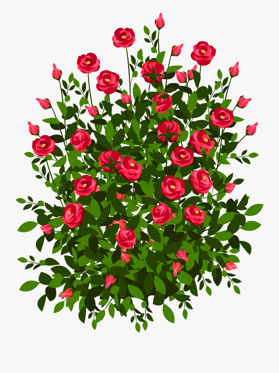 Roses Plant Clipart - Easy Rose Bush Drawing, Transparent Clipart