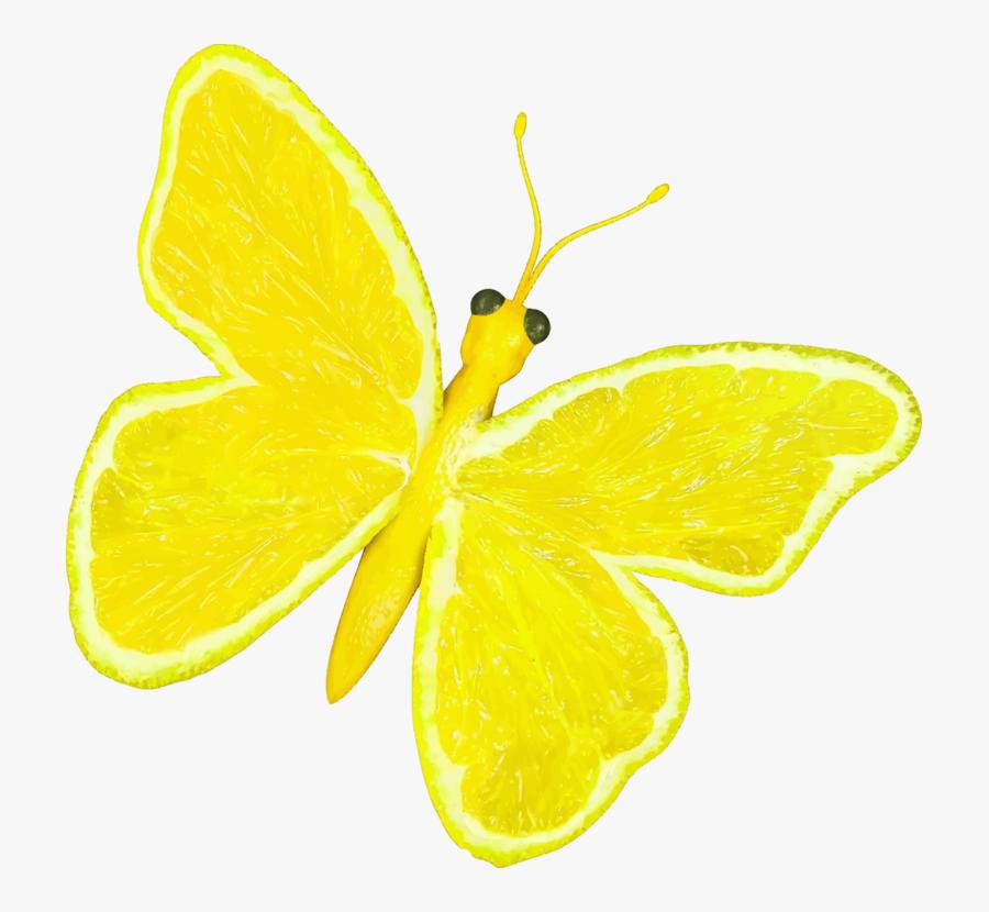 Butterfly,lemon Lime,lemon - Cartoon Yellow Butterfly Png, Transparent Clipart