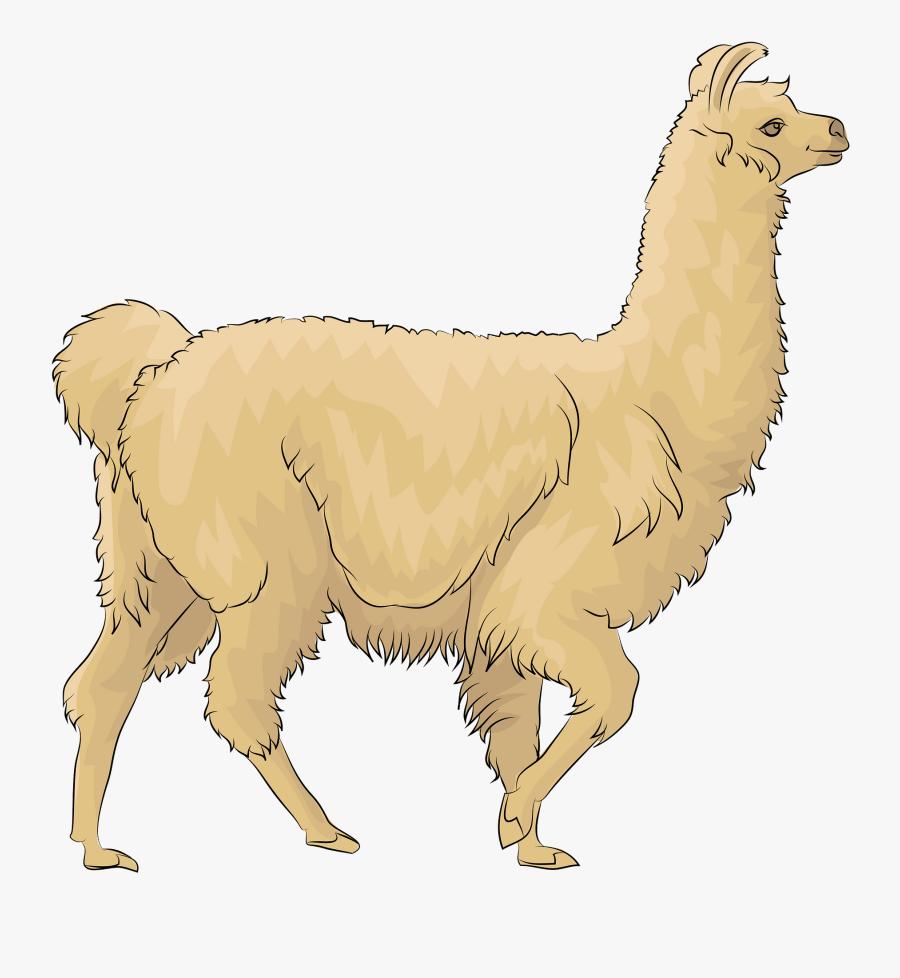 Llama, Transparent Clipart