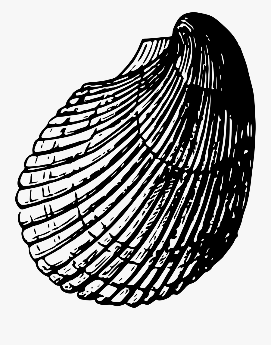 40 Koleski Terbaik Gambar Sketsa Kerang Laut The Toosh