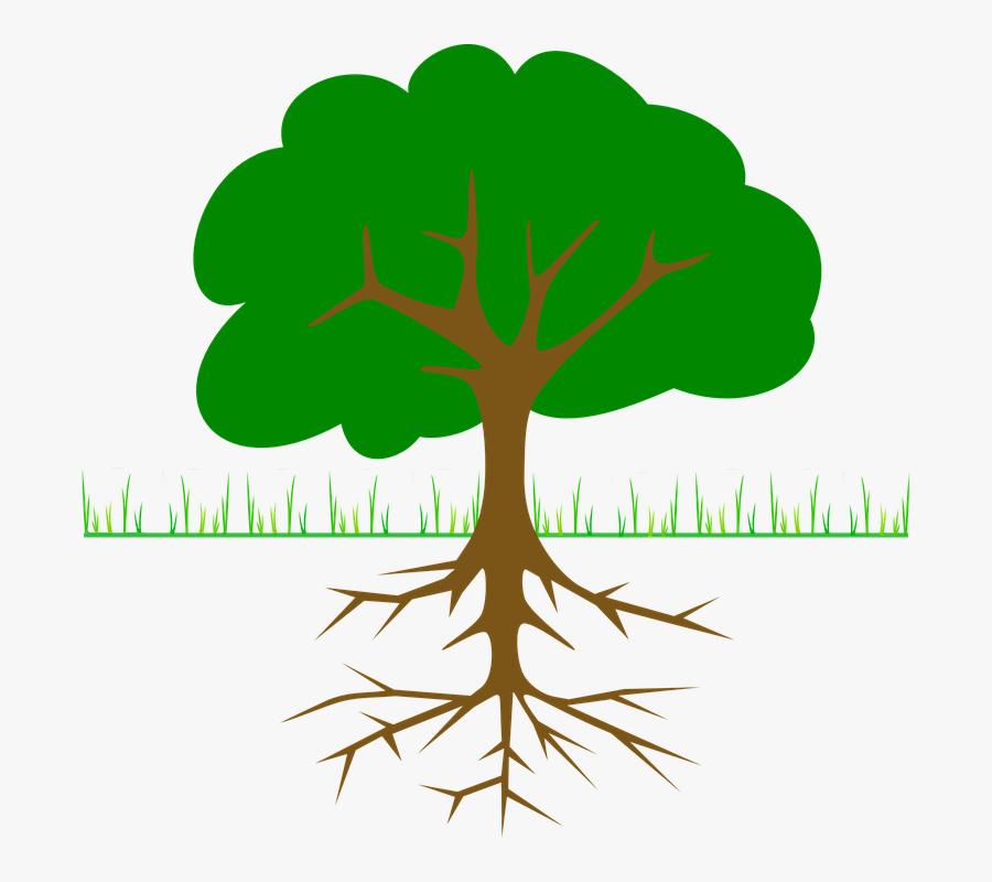 Roots Clipart Tall Tree Stump - Tree Clip Art, Transparent Clipart