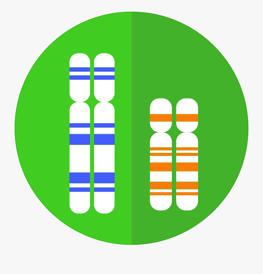 Dna Clipart Genealogy - Chromosome Graphic, Transparent Clipart