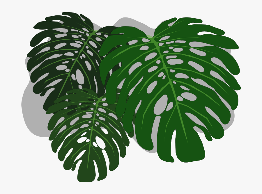 Clip Art Philodendron Swiss Cheese Plant - Philodendron Cartoon, Transparent Clipart