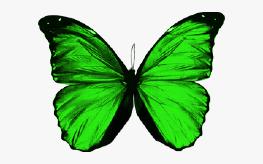 Transparent Green Butterfly Png - Green Butterfly No Background, Transparent Clipart