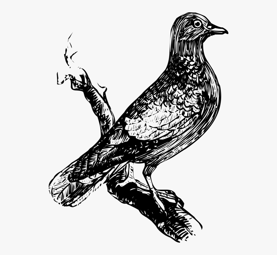 Eagle,wildlife,art - Gambar Ilustrasi Hewan Burung, Transparent Clipart