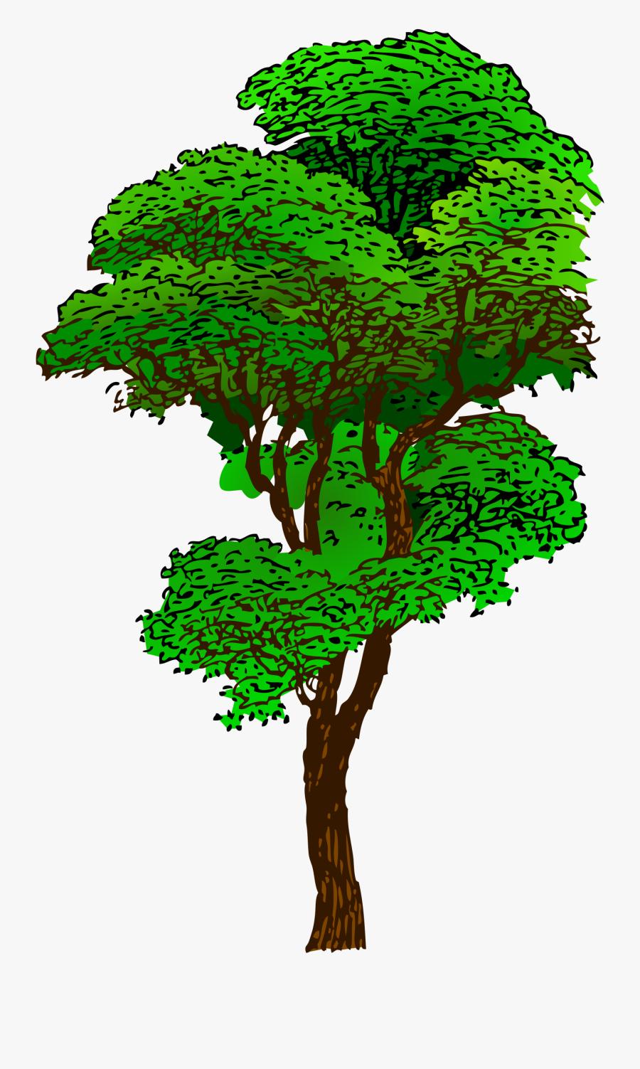 Tropical Rainforest Tree Clip Art - Tropical Rainforest Tree Clipart, Transparent Clipart
