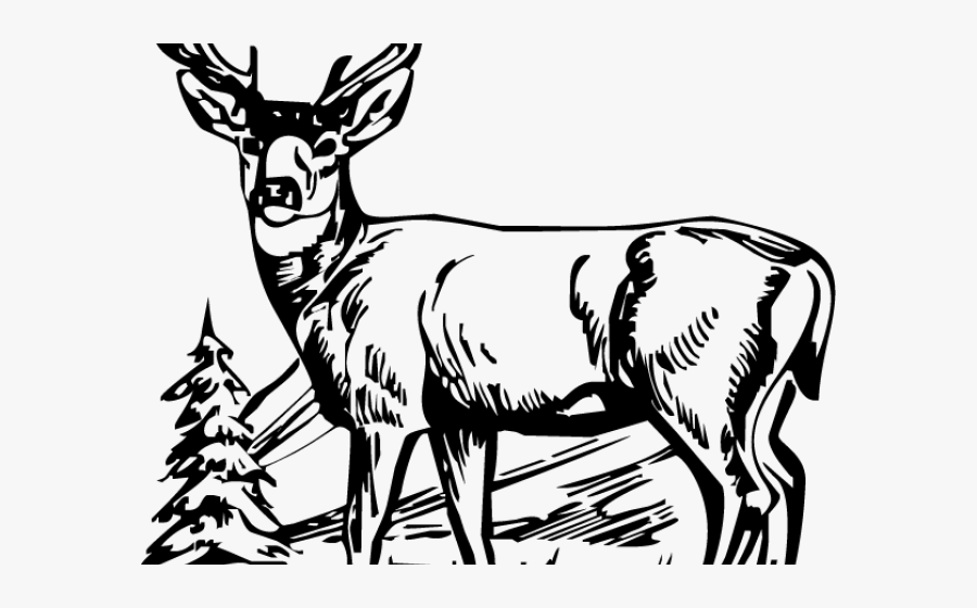 Deer Hunter Cliparts - White Tailed Deer Clipart, Transparent Clipart