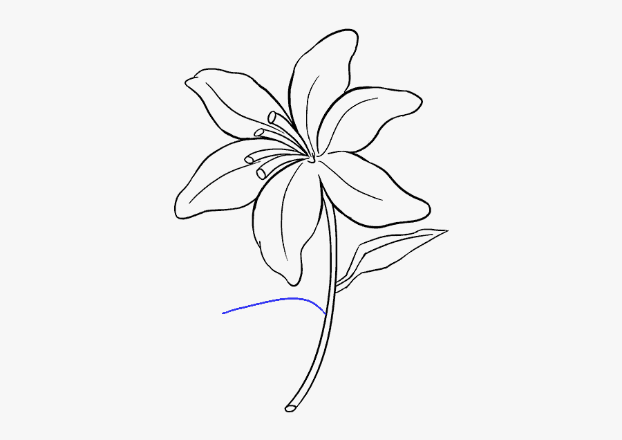 Clip Art How To Draw A - Easter Lily Easy Drawing, Transparent Clipart