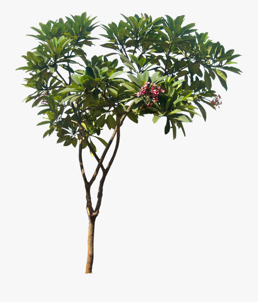 Tropical Tree Clipart