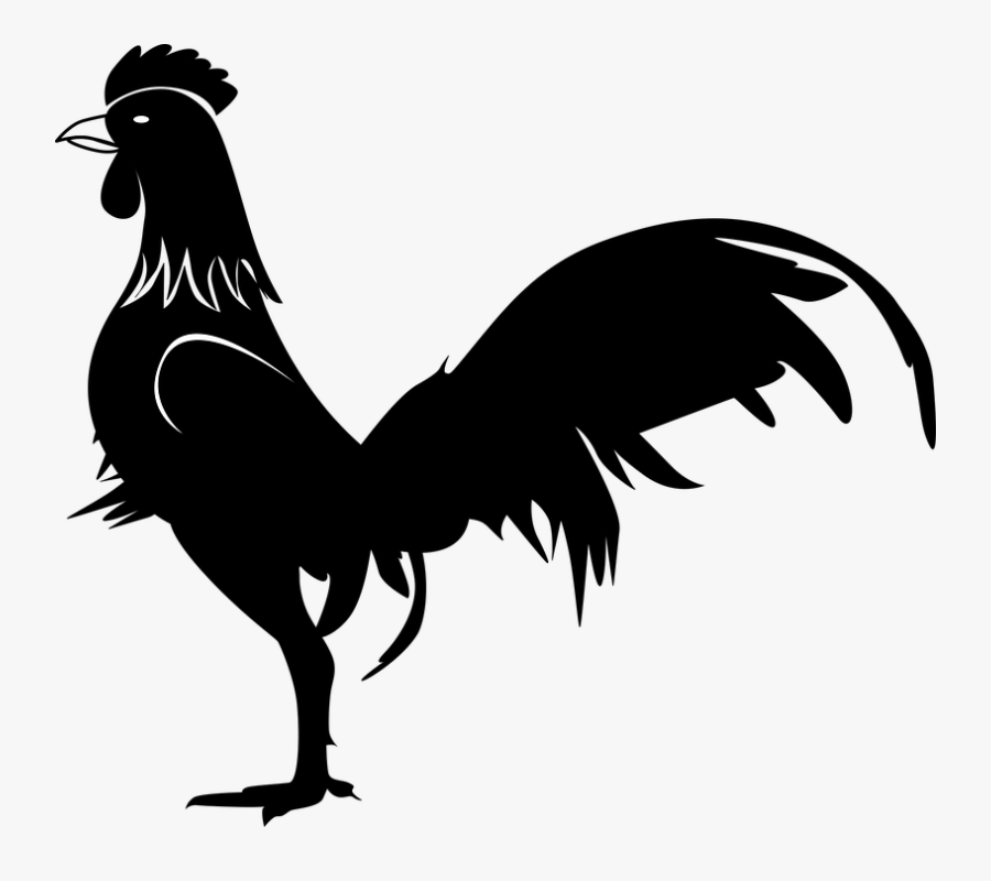 Rooster Images Ayam Jago Hitam Putih Free Transparent Clipart