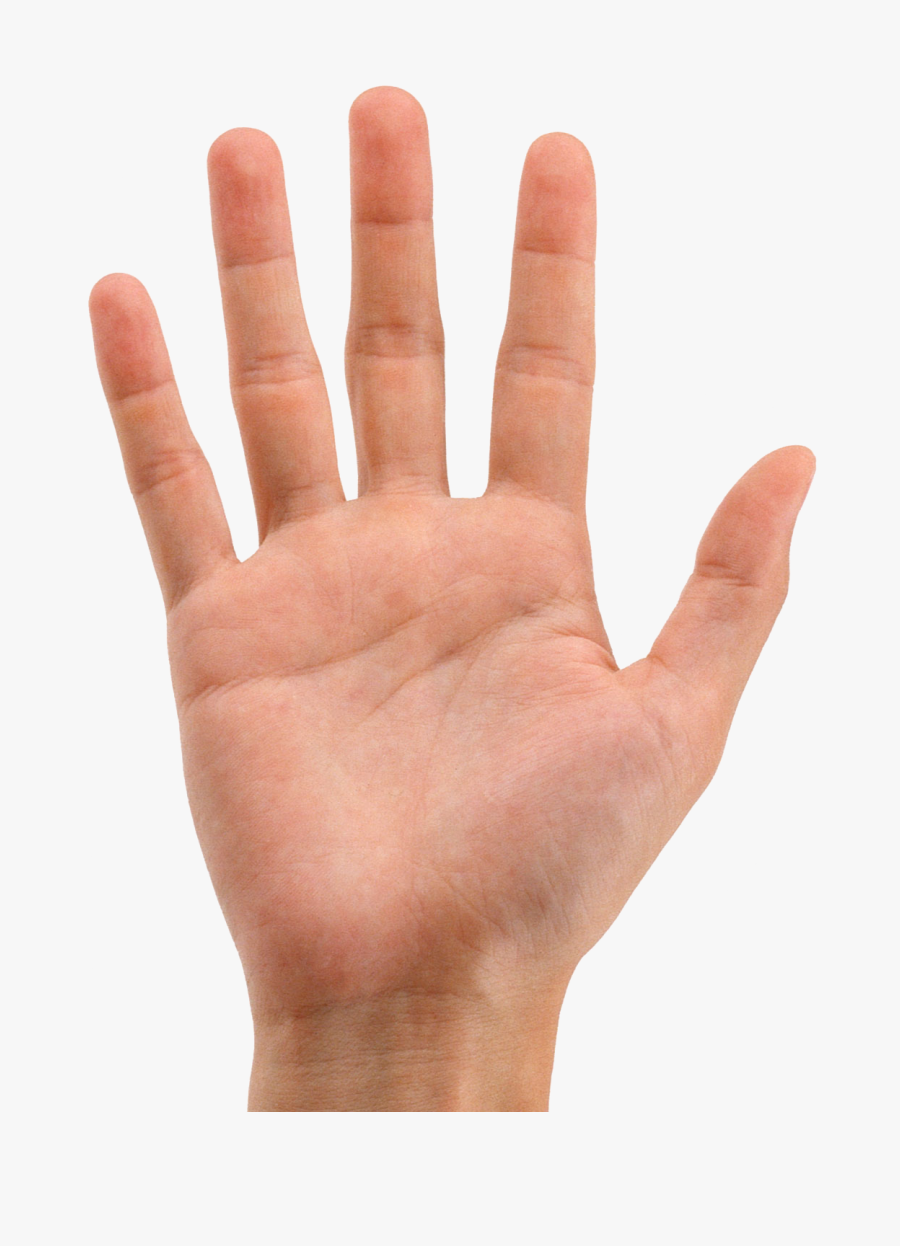 Hands Png Hand Image Transparent Background Hand Transparent Png Free Transparent Clipart Clipartkey We only accept high quality images, minimum 400x400 pixels. hands png hand image transparent