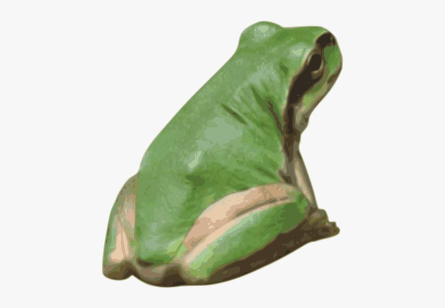 Toad,bullfrog,frog - Toad, Transparent Clipart