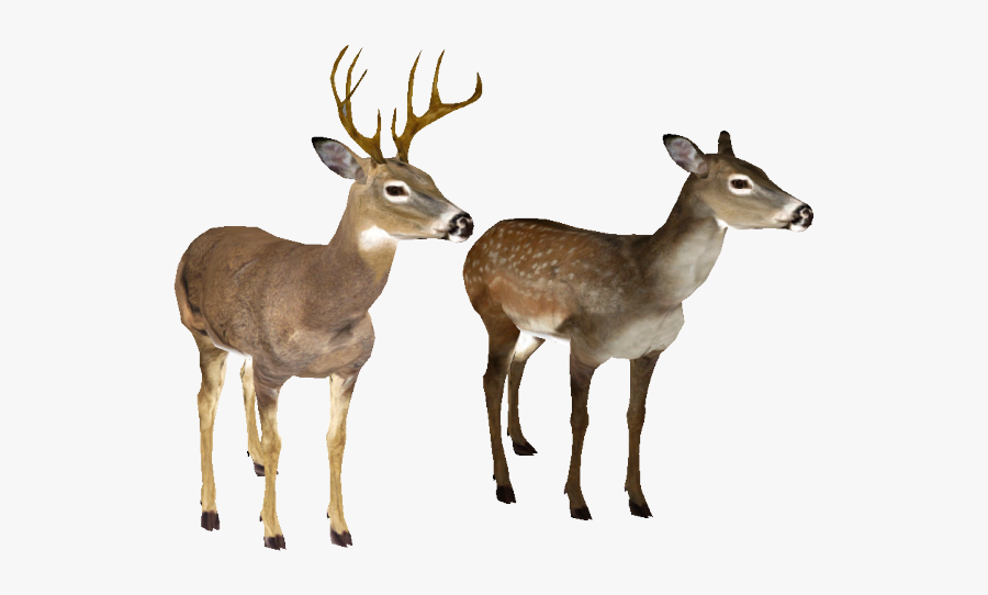 White Tailed Deer No Background, Transparent Clipart