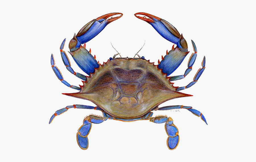 Crab Png Picture - Maryland Blue Crab Clipart, Transparent Clipart