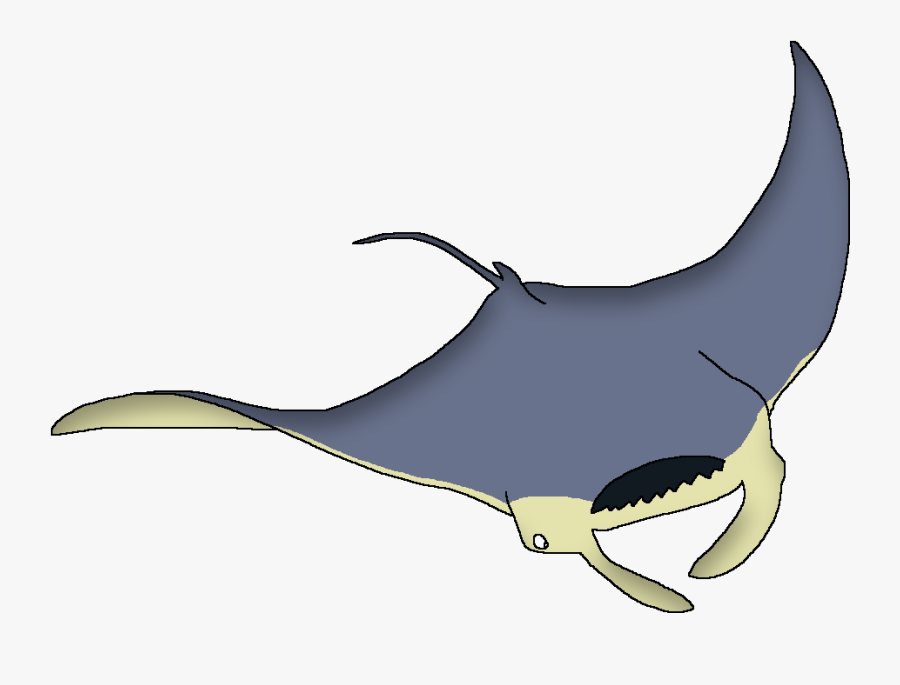 Wildlife Animal Pedia Wiki - Whale, Transparent Clipart