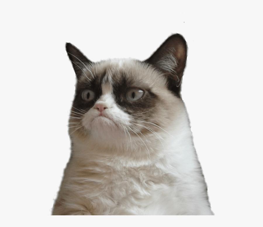 Grumpy Cat Clipart Transparent - Grumpy Cat Face Transparent, Transparent Clipart