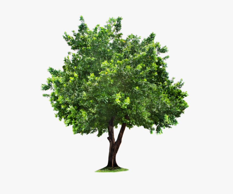 Download Tree Png Clipart For Designing Projects - Green Tree Transparent Background, Transparent Clipart
