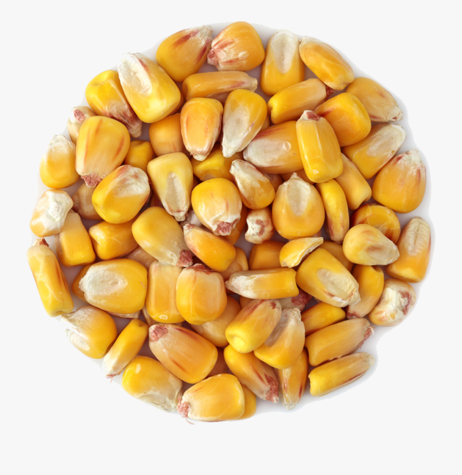 Transparent Grains Png - Corn Grain Transparent, Transparent Clipart