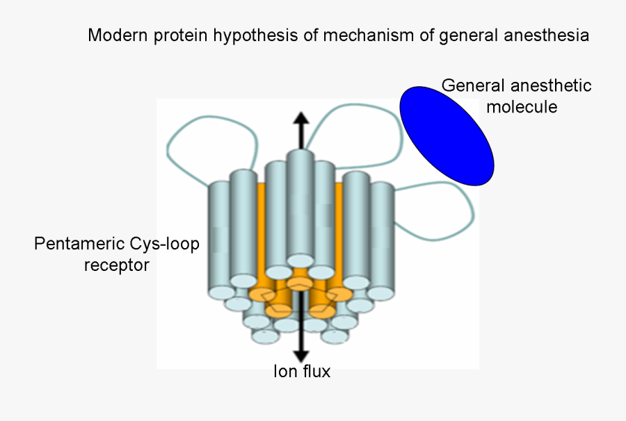 Hypothesis - Pictures - Modern Mechanism Of General Anesthesia, Transparent Clipart