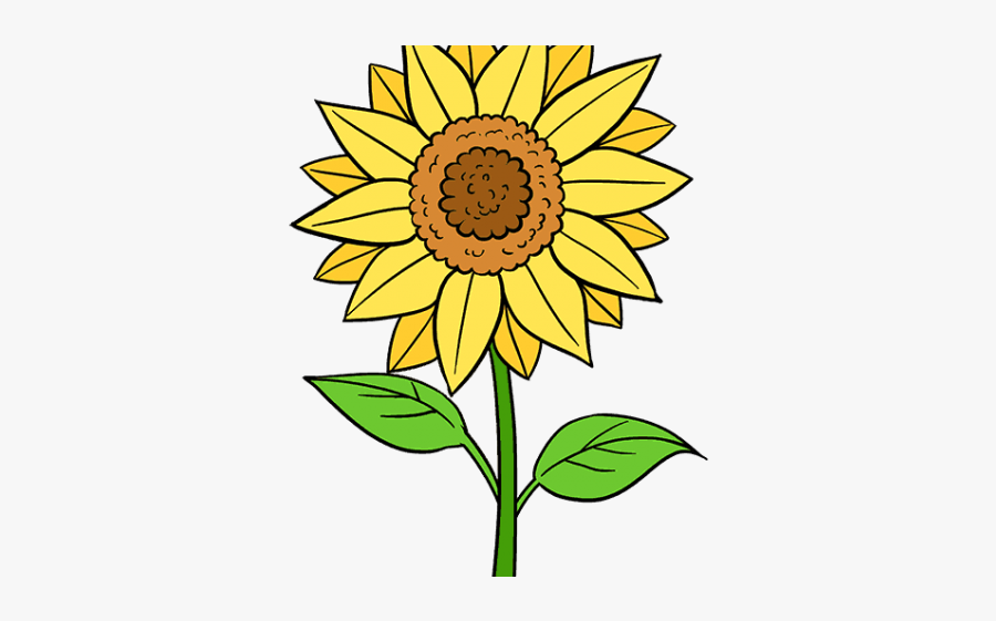 Easy How To Draw A Sunflower, Transparent Clipart