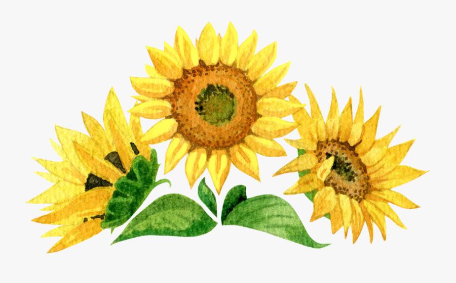 Sunflower Hand Painted Watercolor Set, Transparent Clipart