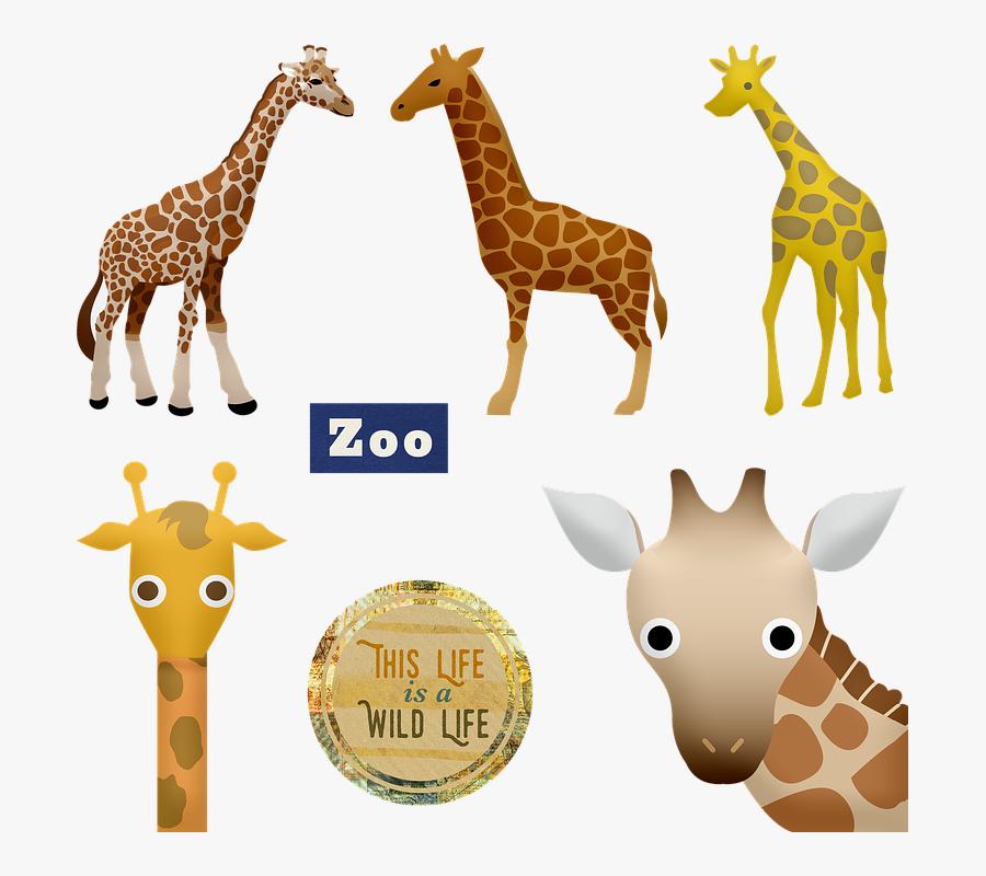 Giraffe, Zoo, Animals, Head, Cute, Funny, Mammal - キリン イラスト, Transparent Clipart