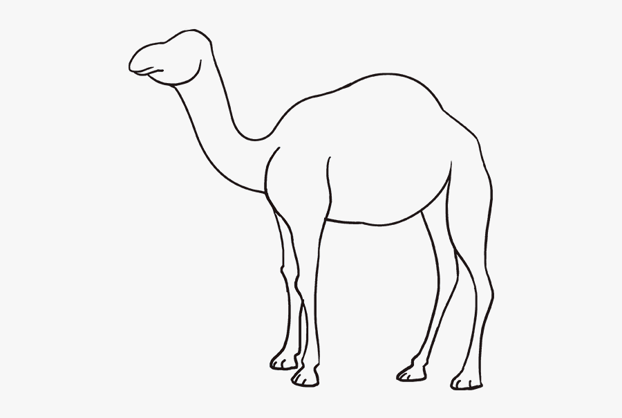 How To Draw Camel - Draw Camel For Kids, Transparent Clipart