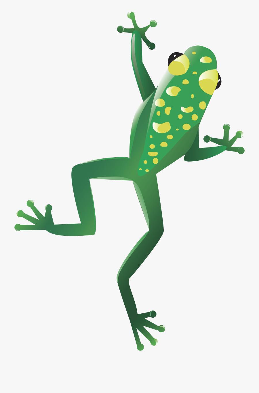 Transparent Green Frog Png - Transparent Background Cute Tree Frog Clipart, Transparent Clipart