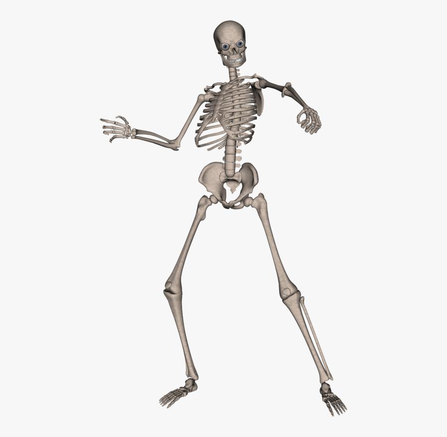 Skeleton, Skull Png Image - Skeletons Png, Transparent Clipart