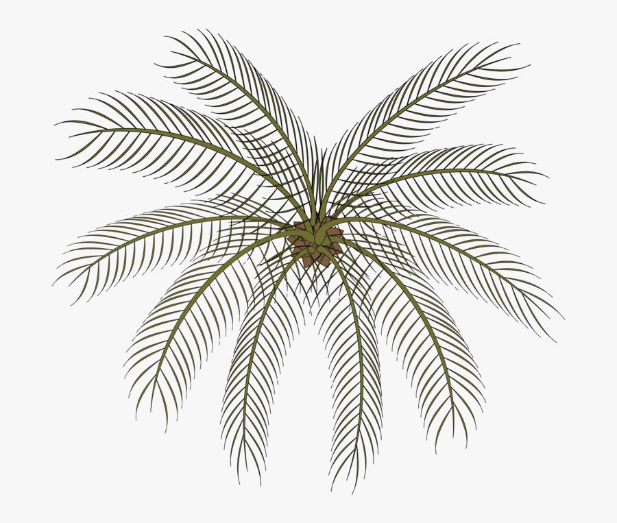 Plant,leaf,symmetry - Palm Small Top View Png, Transparent Clipart