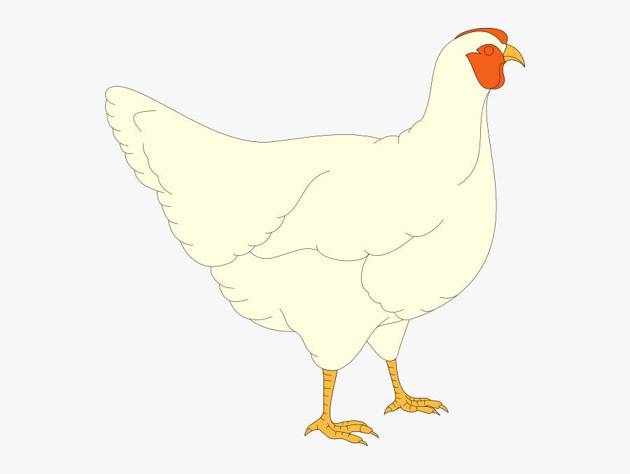 Chicken, Transparent Clipart