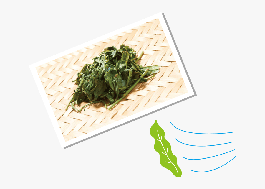 Water Spinach, Transparent Clipart