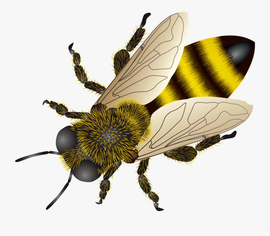Background Honey Bee Transparent Png Bee Transparent, Transparent Clipart