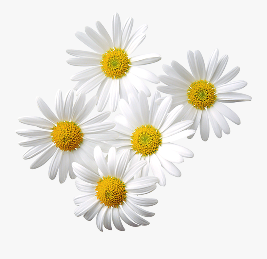 Free Daisy Clipart Public Domain Flower Clip Art Images - Happy Mother's Day Beer, Transparent Clipart