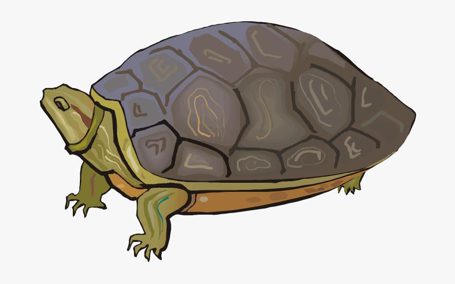 Turtle Clipart Box Turtle - Land Turtle Clip Art, Transparent Clipart