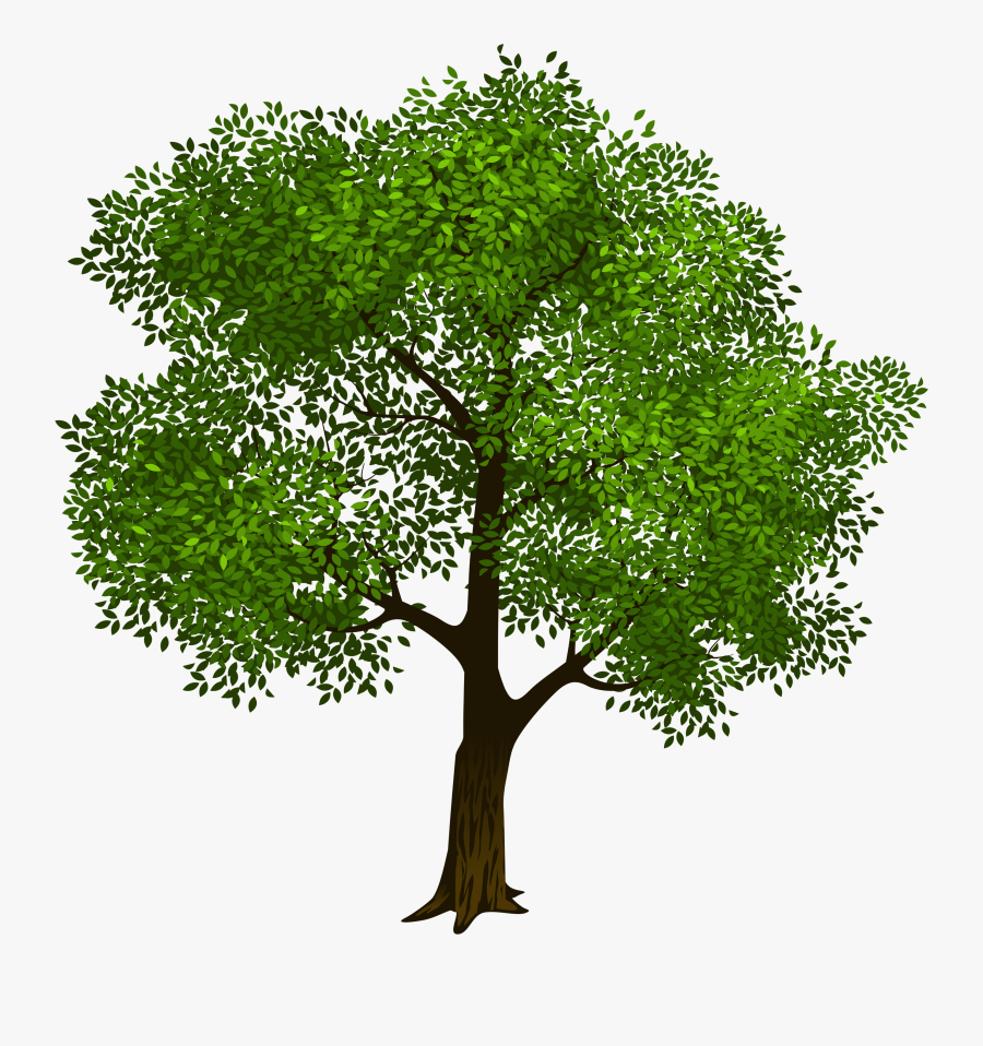 Tree Download Clip Art - Clipart Transparent Background Tree, Transparent Clipart