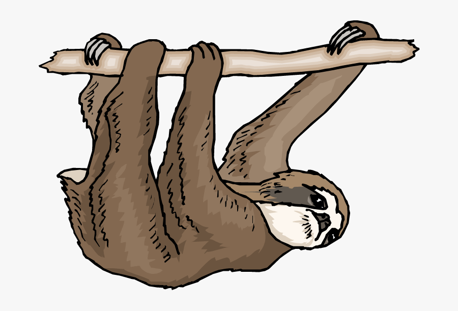 Three Toed Sloth Clipart, Transparent Clipart